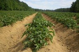 plant-field-farm-leaf-land-environment-1253898-pxhere.com