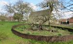 Newton's Apple Tree at Woolsthorpe Manor