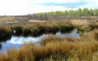 Restoring Yorkshire Peatlands